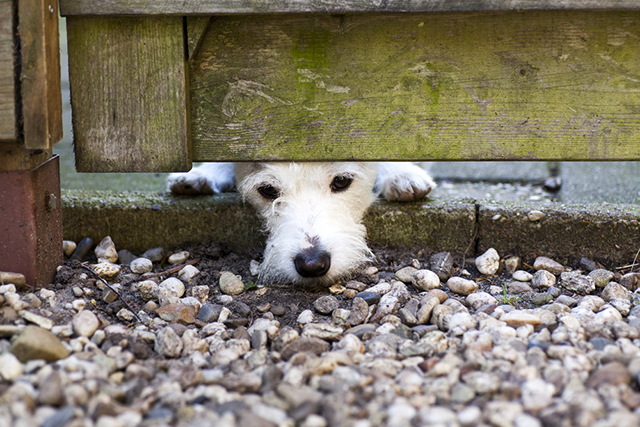dog escape nose under gate fence sad despondent waiting pet portrait