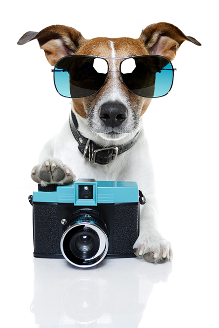 cool dog paw on camera sunglasses trendy dress up camera vintage retro diana f+ lomography pet portrait