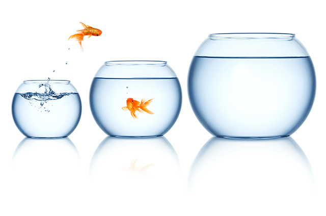 gold fish concept 3 fish bowls size water 2 goldfish jumping leaping escaping funny orange yellow pet portrait