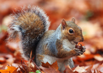 photographing squirrels 1