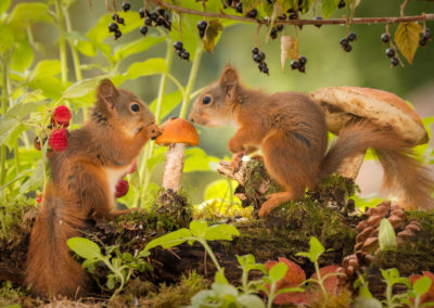 photographing squirrels 2