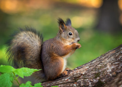 photographing squirrels 3