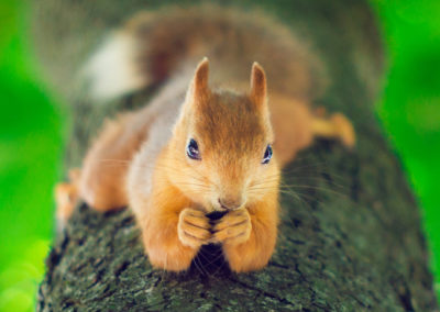 photographing squirrels 4