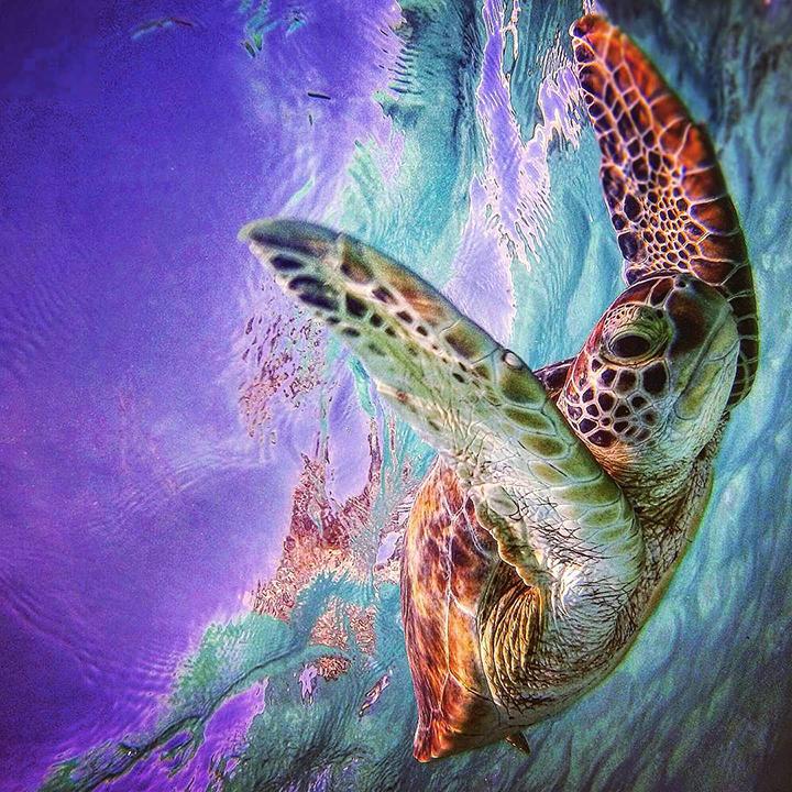 turtle water wildlife sea purple green