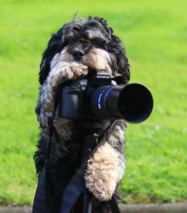dog camera cute photographer olympus lens