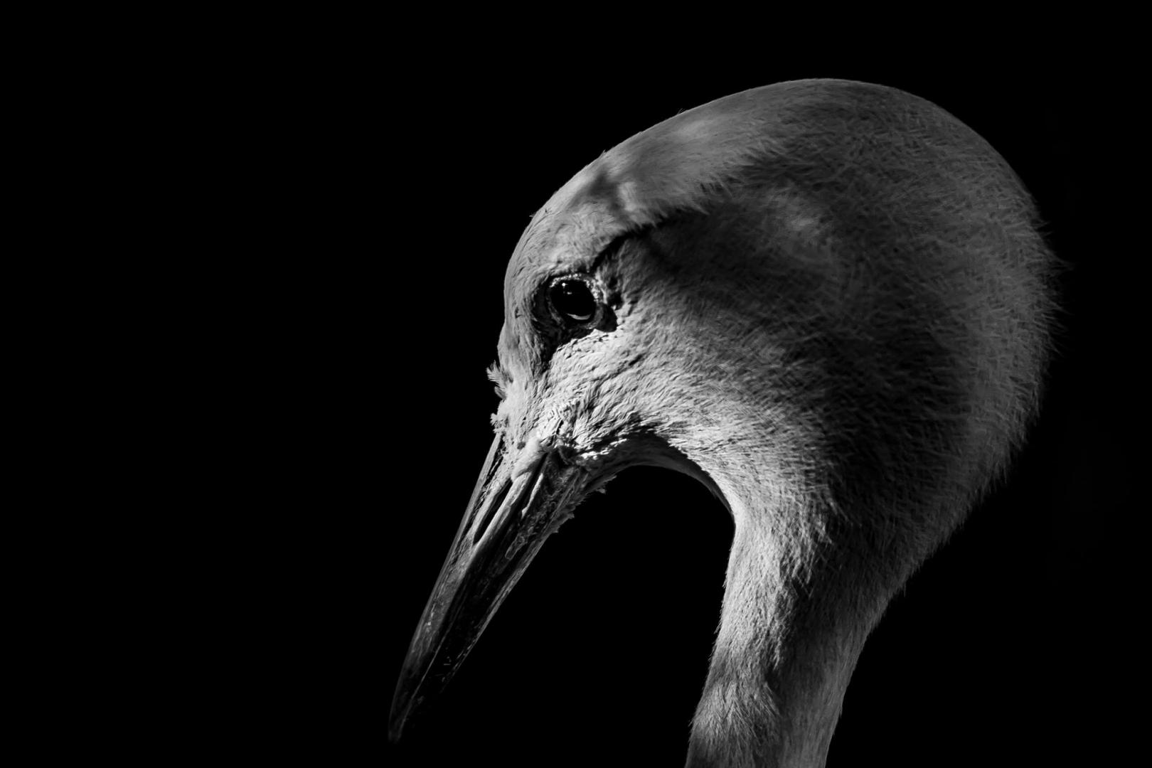 bird black and white beak lighting portrait profile