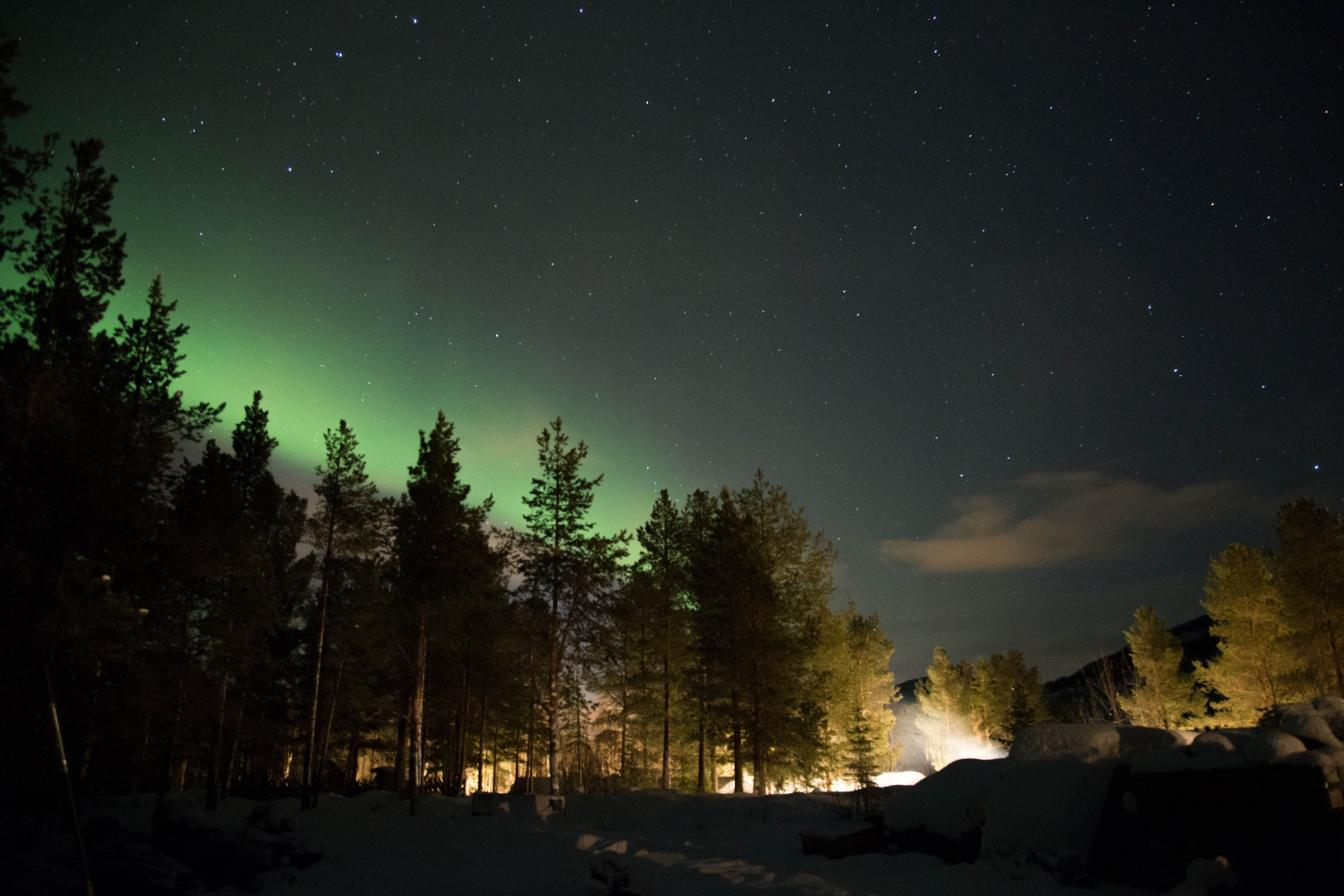 northern lights green sky star tree landscape