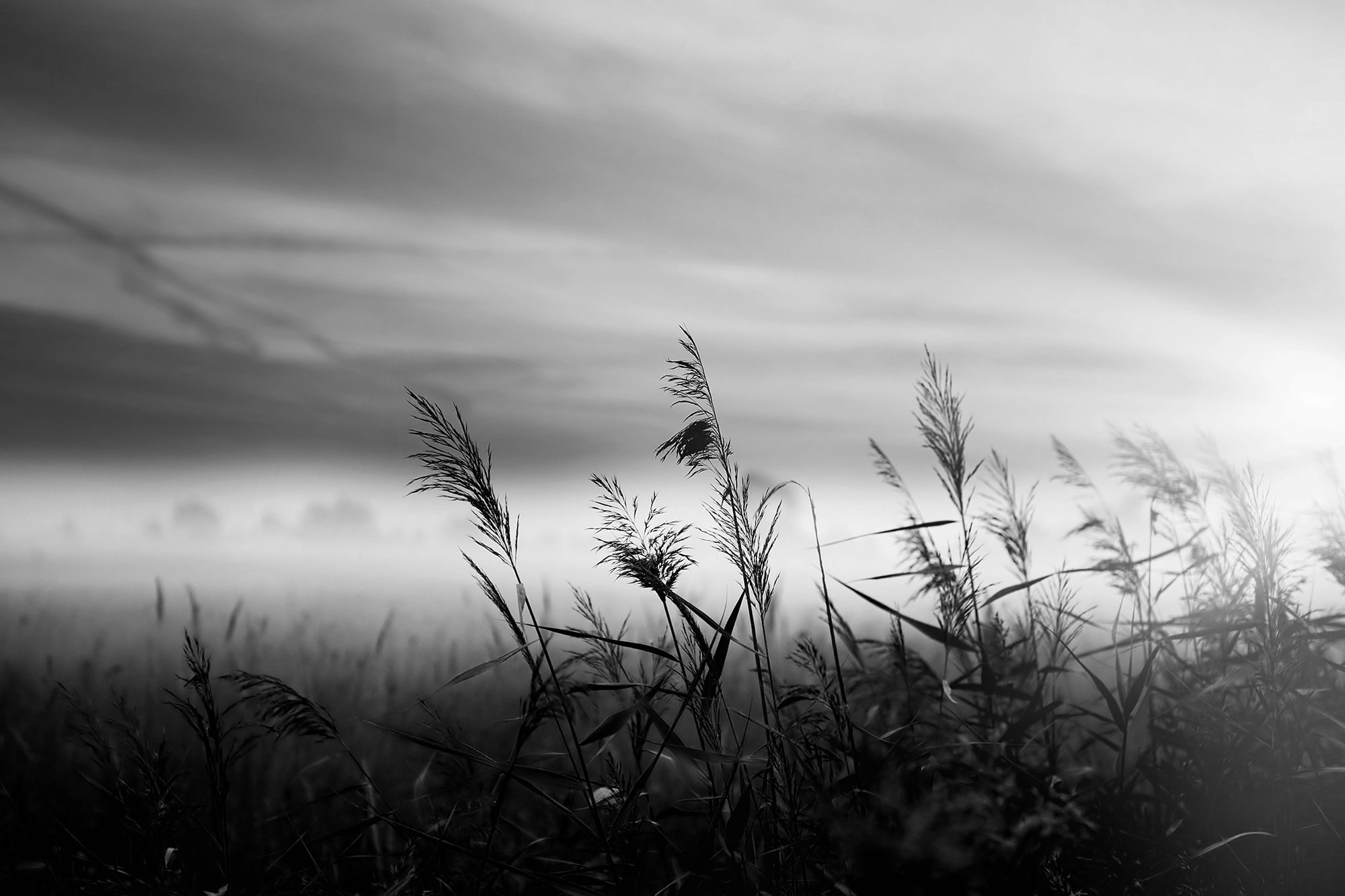 black and white monochrome field barley dark moody
